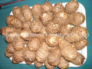 Organic New Crop Fresh Taro pictures & photos