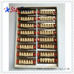 Multi Layer Synthetic Resin Teeth of Dental Material pictures & photos