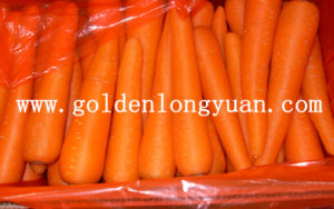 Fresh Carrot New Crop From Shandong pictures & photos