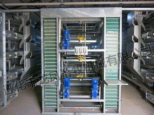 H Type Automatic Chicken Cage pictures & photos