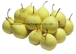 Fresh Golden Pear with Good Price pictures & photos