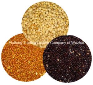 Shanxi Exporting Broom Corn Millet
