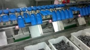 High Quality Poultry and Sea-Food Weight Sorter pictures & photos