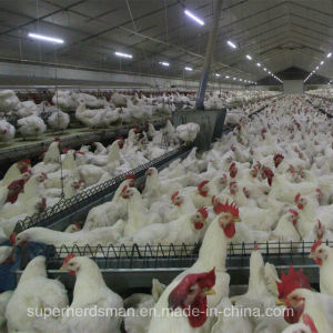 Automatic Poultry Feeder for Breeder pictures & photos