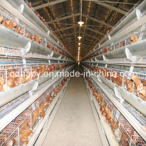 Poultry Farm Automatic Chicken Cage Feeding System for Layer pictures & photos