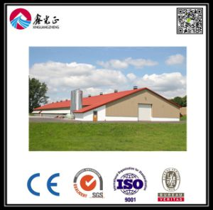 Layer House Poultry Shed/Equipment (BYCH001) pictures & photos