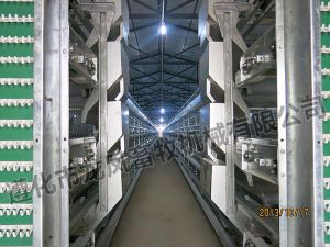 High Quality of Automatic Layer Cage pictures & photos