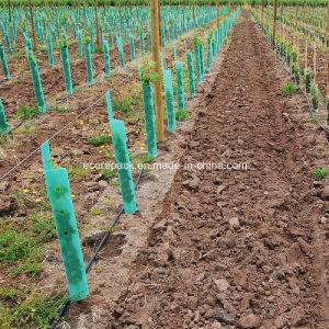Corflute Vine Guard pictures & photos