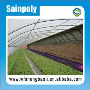 Solar Greenhouse for Vegetable Growing pictures & photos