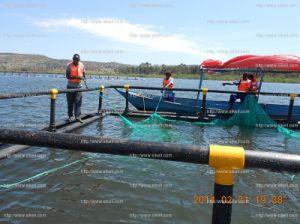HDPE Tilapia Floating 5mx5m Uganda Culture Farm pictures & photos