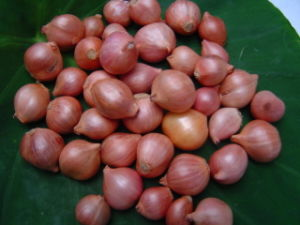 Shallot pictures & photos
