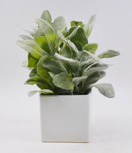 Fake Flocking Green Plants with Ceramic Potted for Deco. pictures & photos
