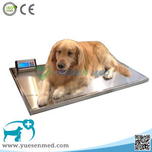 Ysvet-Tzc150 Medical Vet Clinic Veterinary Digital 150kg Weighing Scale pictures & photos