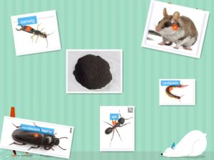 Rodenticide Rat Zinc Phosphide pictures & photos