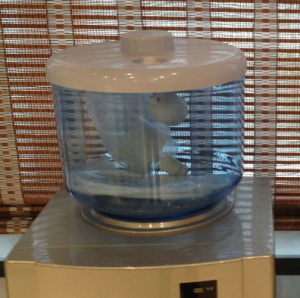 RO Water Dispenser Filter / RO Dispenser Purifier/ RO Mate pictures & photos