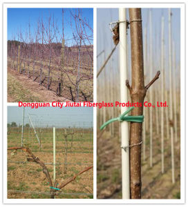 Fiberglass Vine Post, Fiberglass Vineyard Post for Support pictures & photos