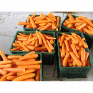 Dehydrated Carrot 3*3*20mm a Quality pictures & photos