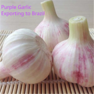 2017 New Season Fresh Vegetables Garlic Top Quality pictures & photos