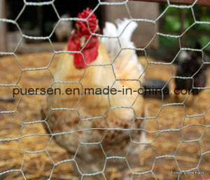 Small Hexagonal Mesh Chicken Wire Net pictures & photos
