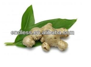 Ginger Extract Powder Good for Morning Sickness pictures & photos