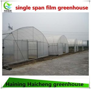 China Professional Film Green House for Pepper pictures & photos