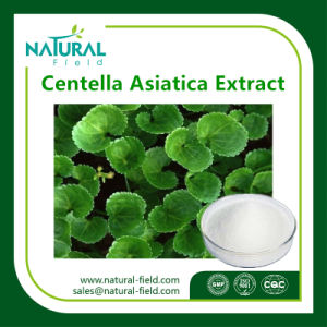 10%-95% Asiaticoside Powder Gotu Kola Extractplant Extract Plant Extract pictures & photos