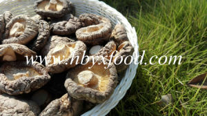 Smooth Shiitake Mushrooms 1kgs Pack with Cap 4-6cm and No Stem pictures & photos