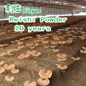 Reishi Extract Powder