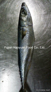 Whole Round Frozen Fish Pacific Mackerel pictures & photos