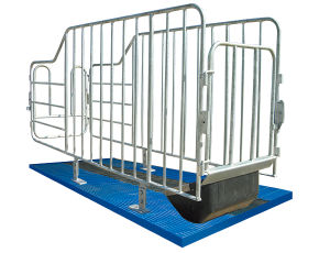 Galvanized Pipe Farrowing Crates for Pigs pictures & photos