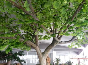 Green Leaves Artificial Maidenhair Tree (for indoor&outdoor decoration) pictures & photos