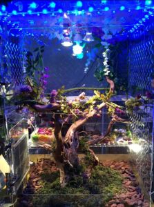 Acrylic Reptile House Comes with LED Light pictures & photos
