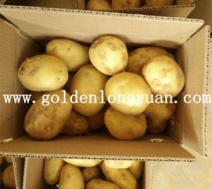 Fresh New Crop Potato From Shandong Origin pictures & photos
