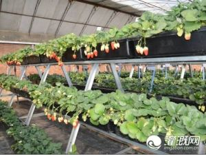 The Sainpoly Commercial Hydroponics Greenhouse pictures & photos