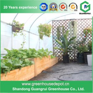 Cheap DIY Tunnel Backyard Greenhouse pictures & photos