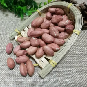 New Crop Peanut Kernels From Shandong Guanghua pictures & photos