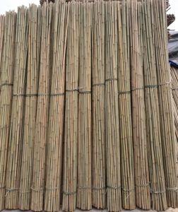 Bamboo Cane 295 pictures & photos