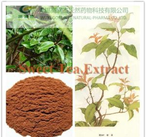 Flagship Products Sweet Tea Extract/Rubusoside & Polyphenol pictures & photos