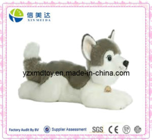 Stuffed Cute Husky Plush Dog Toy pictures & photos