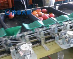 300PCS/Min Automatic Online Fruit Weight Sorter pictures & photos