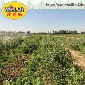 Medlar Effective Food Red Dried Gojiberry