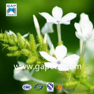 Chinese Herb Medicine Radix Plumbago Zeylanicae