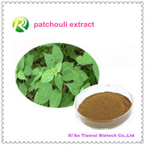 Factory Supply Directly Herba Pogostemonis P. E. Patchouli Extract pictures & photos