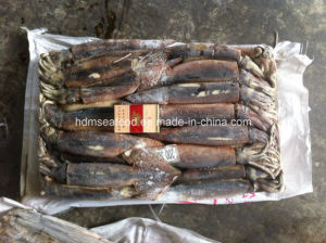 Wholesale Frozen Seafood 200-300g Illex Squid pictures & photos