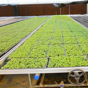 Hot Good Quality Greenhouse Seeding Nursery Bed pictures & photos