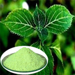Damiana Extract for Male Health pictures & photos