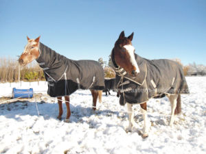Winter Combo, Horse Rug, Horse, Horse Product, Horse Riding (New-NZ) pictures & photos