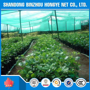 Longlife Sun Shade Net/Greenhouse Sun Shade Net pictures & photos