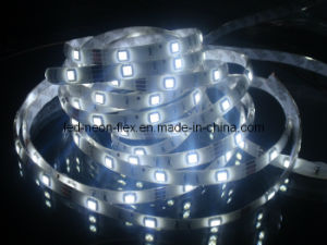 CE EMC LVD RoHS Two Years Warranty, LED Flexible SMD3528/5050 Cool White Strip Light with CE & RoHS pictures & photos