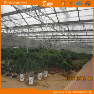 Dutch Technology Venlo Type Greenhouse Covered by Glass pictures & photos